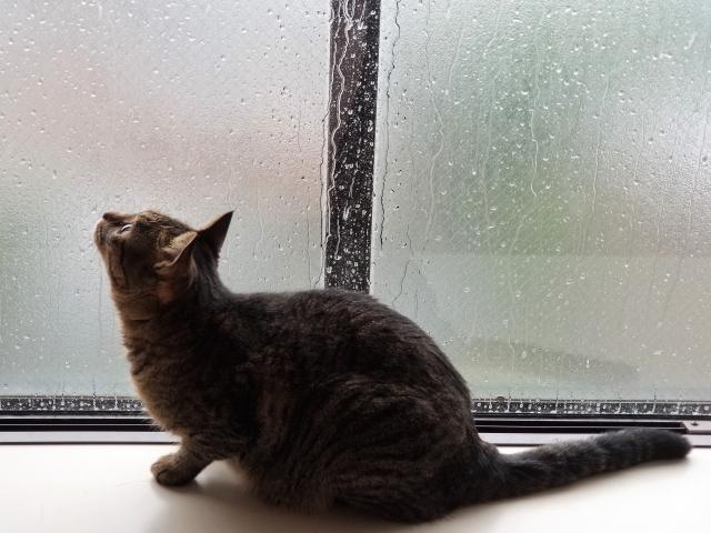 窓ガラスに雨